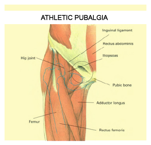 Alternative Muscular Therapy | Your Path To Muscle Wellness